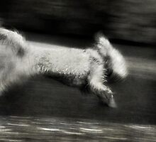 Exuberance by Lynnette Peizer