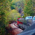 Riding The Ozark Rails by NatureGreeting Cards ©ccwri