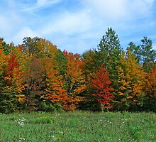 Colorbook Fall,Fifield Wisconsin U.S.A. by JohnDSmith