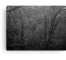 Forest Light B&W Canvas Print
