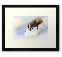 house fly closeup Framed Print