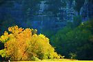 Golden Glow by NatureGreeting Cards ©ccwri