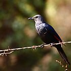 Bird on a wire by Graeme Mockler
