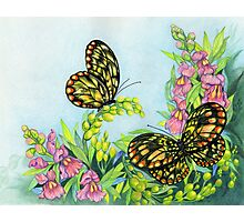 Butterflies and Snapdragons Photographic Print