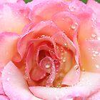 """Rose After The Rain"" by jonxiv"