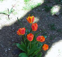 Tulips In Spring by Bearie23