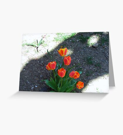 Tulips In Spring Greeting Card