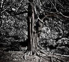 Roots by Stuart  Noall