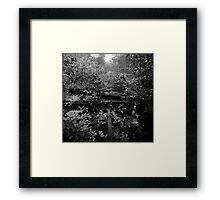 Nature Track Framed Print