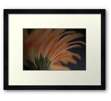 Glowing Gerbera Framed Print