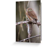 Hunger -- Northern Pygmy Owl Greeting Card