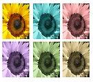 Sunflowers by buttonpresser