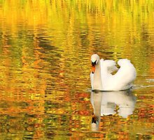 Swan, Painshill Lake by Rachael Talibart