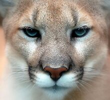 Furry Cougar