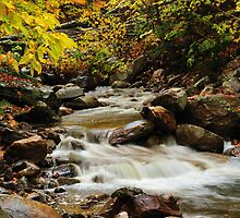 Stream in the Woods by Greg Meland