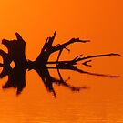 Marsh Abstract by lorilee