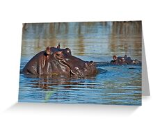 Learning to swim Greeting Card
