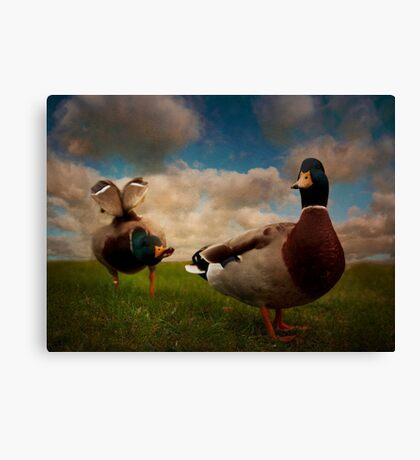Quackers Canvas Print