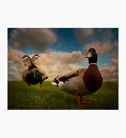 Quackers Photographic Print