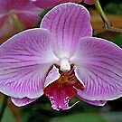 Purple Orchid by Vickie Emms