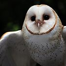 Barn Owl by Mike Martin