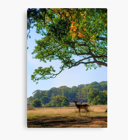 From A Distance Canvas Print