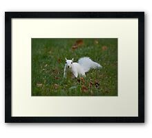 Surprise in the grass Framed Print
