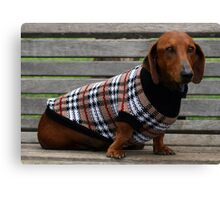 Frankie the dachshund Canvas Print