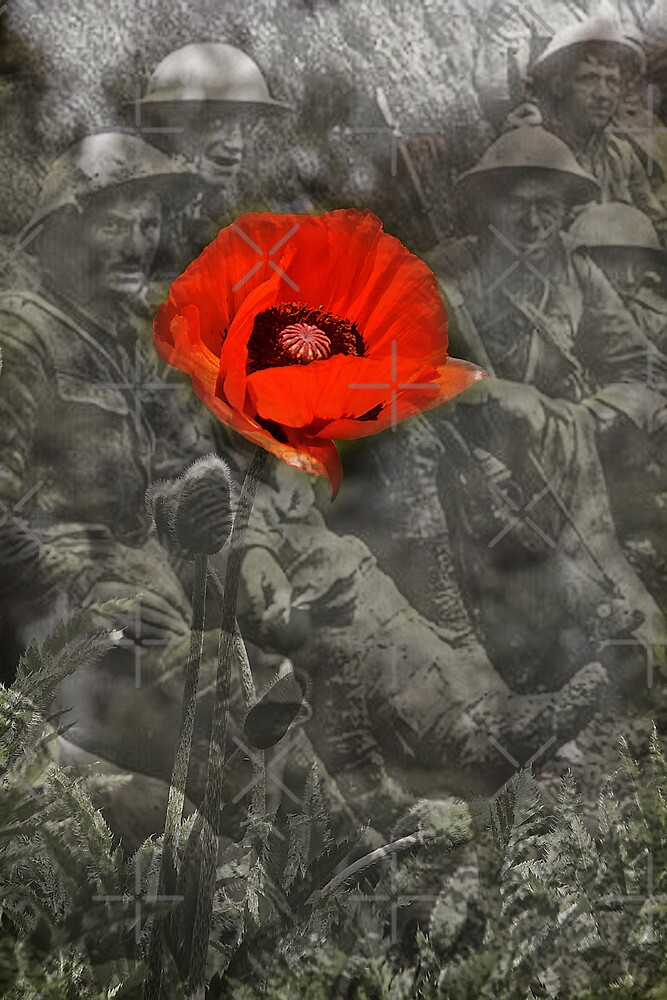 In Flanders Fields by Country  Pursuits
