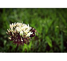 sweet summers  Photographic Print