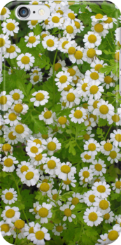 Yellow-centred white summer blossoms, for iPhone by Philip Mitchell