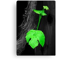 Sign of Life select Canvas Print