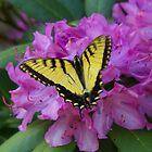 Butterfly on Laurel by Annlynn Ward