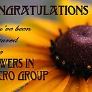 Flowers In Macro Featured Banner by Rhonda Blais
