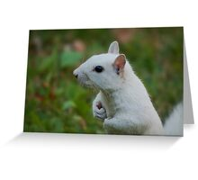 White guardian on the lookout Greeting Card