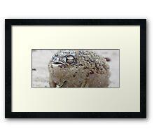 Dessert rain frog Framed Print