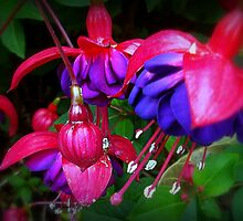 Scarlet Fever by naturelover