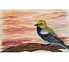 Goldfinch Among Sunset Sky  Photographic Print