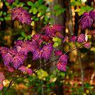 Purple bush by LudaNayvelt