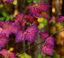 Purple bush Sticker