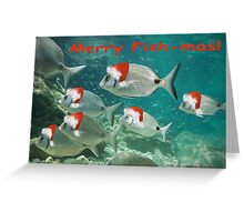 Fish Christmas Card: 3 Greeting Card