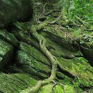 Treerootcase by Glenn Cecero