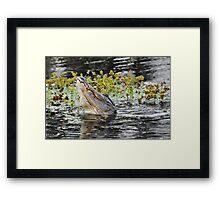 Roaring Alligator Framed Print