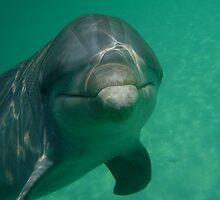 Friendly Dolphin by snefne