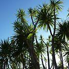 Palms by Fara