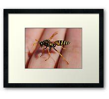 Paper Wasp Framed Print
