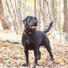 My Dog Brody by mikepaulhamus