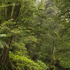Donna Buang Forest by Bette Devine