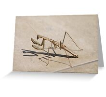 Praying Mantis and Shadow Greeting Card