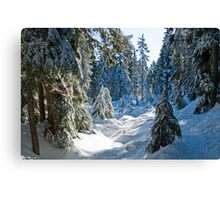 Beautiful BC Winter Day Canvas Print